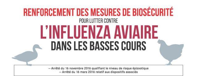 Influenza Aviaire: recommandations pour les basses cours